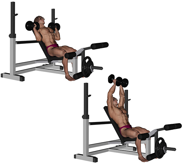 musculation pectoraux developpe incline assis