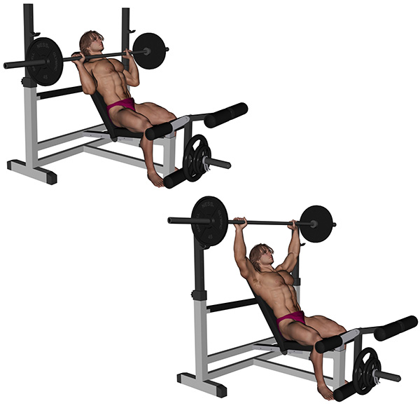 musculation pectoraux developpe incline