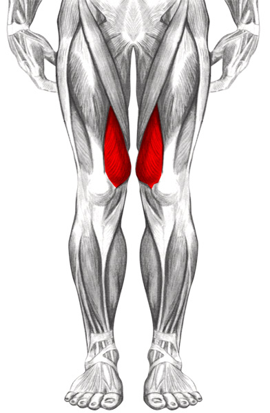 Muscles l 39 articulation du genou vaste interne for Douleur interieur genou